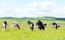 宁夏:努力构建畜牧业发展新格局 推动现代畜牧的绿色发展