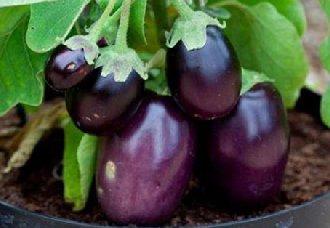 茄子需要怎么施肥?茄子施肥技术