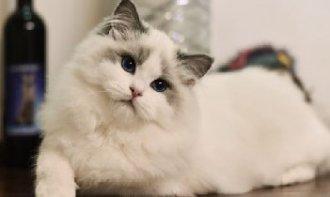 猫不能吃哪些食物?猫不能吃的食物介绍