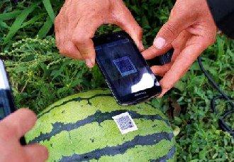 湖南:西瓜走在科技的前沿 身上挂有二维码同时也是其身份证