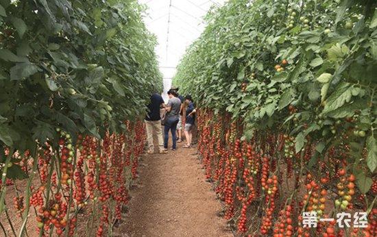以色列种子公司举行开放日活动 南美多国农场主和代表参与活动