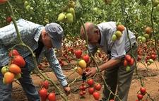 <b>以色列种子公司举行开放日活动 南美多国农场主和代表参与活动</b>