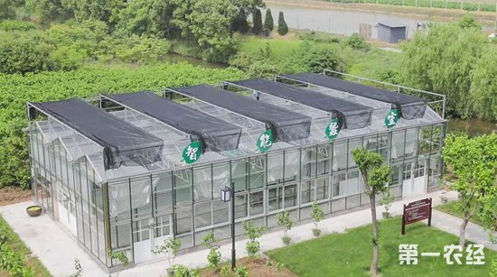 创新驱动,浙江海宁云龙村蚕桑产业也焕发新活力