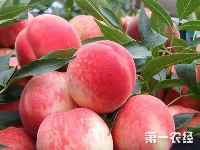 葡京网址宁波:今年夏令水果价格比去年更便宜