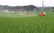 宁夏:加大对农作物的病虫害防控