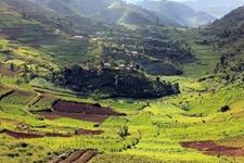 <b>乌干达农业落后难创收 欲推动经济增长必须改善农业</b>