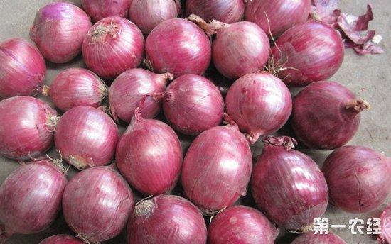 印尼五家洋葱进口商欺诈 假红葱头致损数万亿卢比
