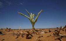 厄尔尼诺天气或将致非洲南部早期农作物减产
