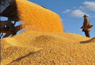 宁夏:小麦即将收割上市 2018又是个丰收年