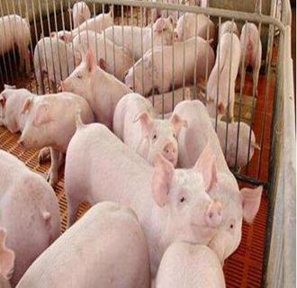 部分地区生猪市场供应量下降,出栏下降!