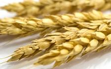 乌克兰2017/2018年度粮食出口量减少了490万吨
