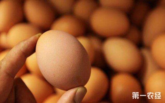 蛋价不见上涨,怎么看2018年下半年的鸡蛋市场