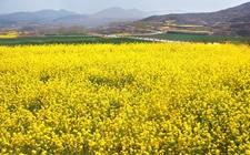 济南商河县:加快现代农业发展 推进产业转型升级