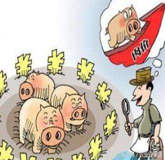 今日猪价持续稳中震荡,进入调整状态