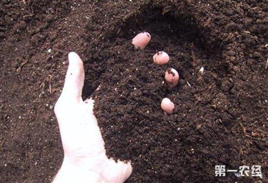 农资经营者注意了,农业部批准登记的微生物肥料只有这11类!