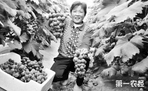 夏季瓜果大丰收 农民们分享劳动成果