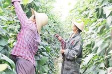 夏季瓜果大量上市 农民们分享劳动成果