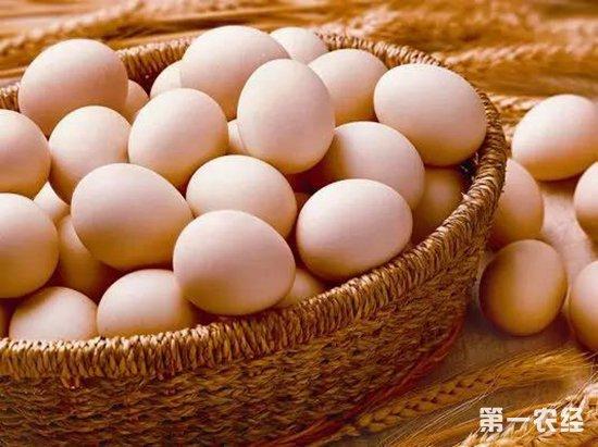 专家表示:沙氏门菌不会造成鸡蛋长斑