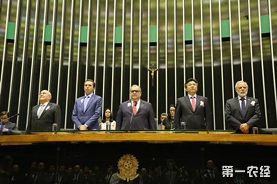 """巴西设立""""中国移民日"""" 肯定华侨华人贡献度"""