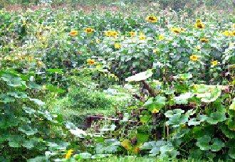 村官木保岩上任后调整种植养殖业 增加农民收入一起奔小康