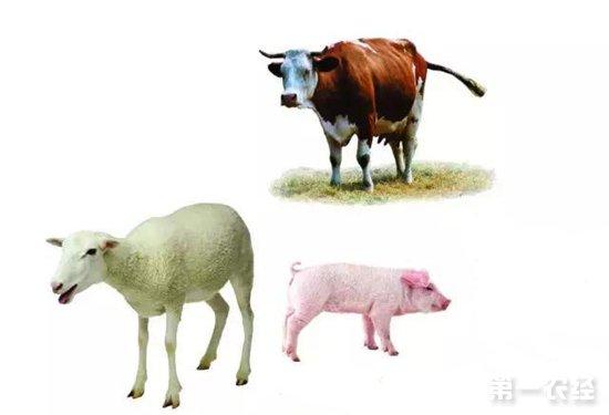 """安徽活牲畜生产价格""""两涨一跌"""""""