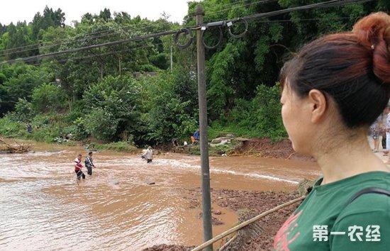 四川内江:洪水突袭冲走十万多斤鱼 鱼塘主人致损百万掩面大哭