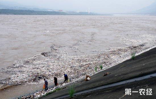 长江2018年第1号洪水形成 水位缓退正在通过三峡库区