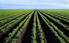 <b>科技创新将成为未来中国农业可持续发展的关键</b>