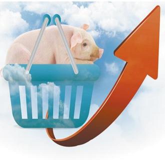今日猪价持续上涨,优质猪源偏紧!
