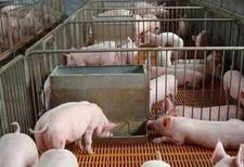 养猪场正确安装设备,省心又省力!