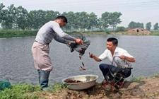 <b>小龙虾怎么养?小龙虾的高效养殖技术</b>