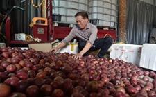 <b>广西梧州:借助农村电商 拓宽农产品销售渠道</b>