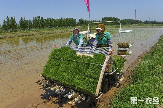 江苏省粮食生产机械化程度进一步提高 下一步将补足短板