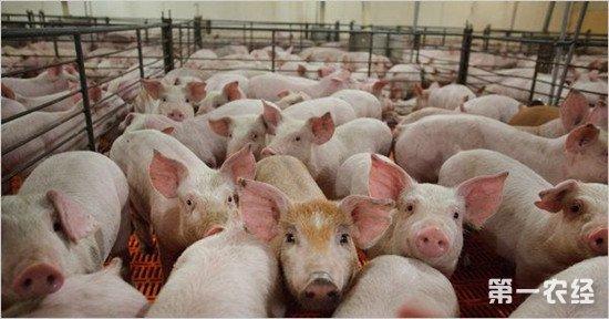 中美贸易战将使美国猪肉跌价10%