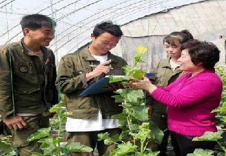 <b>山东枣庄:高级农艺师冯传荣摇身一变成植物大夫 积极推广种植技术</b>