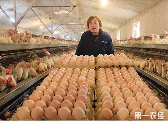 产蛋率下降?可能是得了鸡产蛋下降综合症