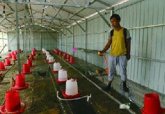 养鸡场如何做好消毒工作?鸡舍消毒技术