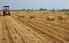 江苏灌南:小麦秸秆变废为宝 保护资源又创收