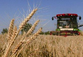 小麦收割遇阴雨天怎么办?小麦收割的注意事项