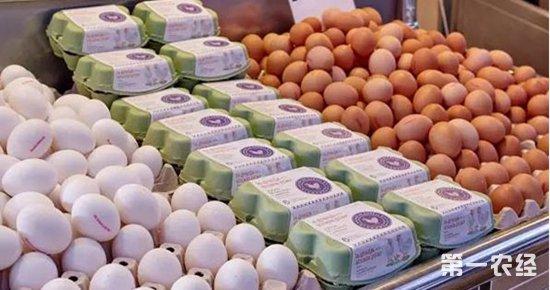 鸡蛋品牌化,蛋鸡行业洗牌是必然趋势