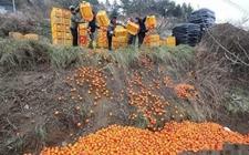 农产品滞销怎么看?从品质到渠道都要打通关