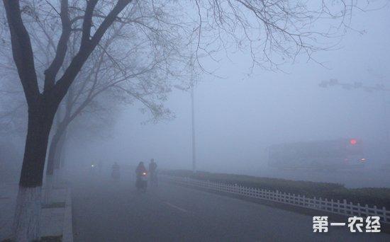 空气污染致患糖尿病?美国科学家这项研究是否科学?