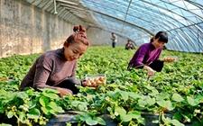 四川省蒲江县:大力发展生态有机农业