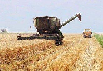 宁夏杨柜村:夏粮小麦大丰收 总产达到41.2万吨