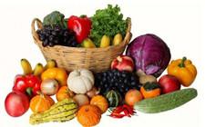 <b>贵州务川,助力蔬菜产业扶贫</b>