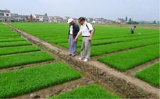 水稻种植中的常见病虫害有哪些?如何防治?