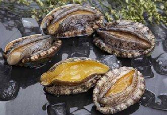 鲍鱼的种类有哪些?国产鲍和进口鲍的介绍