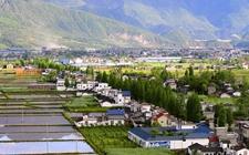 乡村振兴战略出奇效 农村新产业持续快速发展