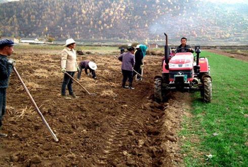 内蒙古石宝镇坤兑滩村:政府出台一系列扶贫政策 种植黄芪成功脱贫
