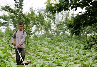 <b>重庆黔江:退伍兵李光青果树下套种多种农作物 实现丰产致富</b>